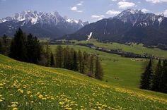 Photo:  Countryside Dandelions Italy