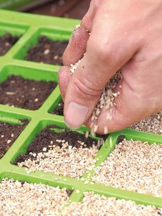 Sow Ornamental Grasses From Seed : Outdoors : Home & Garden Television