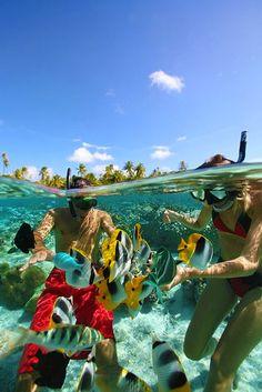 Split View of Starfish Beach, Water Cay Cayman Islands © Berrak Deniz