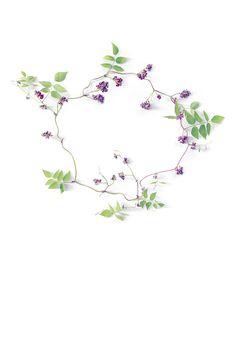groundnut vine (mary jo hoffman)