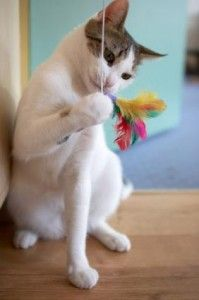 12 Easy To Make Cat Toys