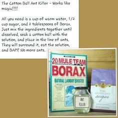 Cotton Ball Ant killer