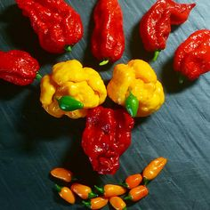 Funny hotpeppers face #tabasco Short yellow #moruga yellow #ghost red www.peperoncinipiccanti.com