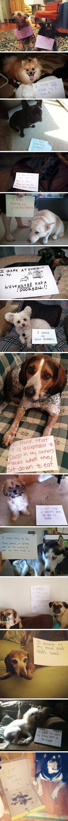 Dog shaming, they really didn't mean it!!