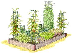 This is the coolest gardening site EVER! On the Gardeners Supply Company website you can design your own garden beds by clicking and dragging the plants you want, where you want them. Then you can print your planting map WITH very detailed planting directions. Hurray!!!:)
