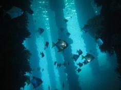 fishies among columns