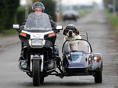 Motorcycle Hound! St. Bernard Rides a Sidecar