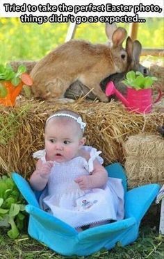 Those rabbits,  lol