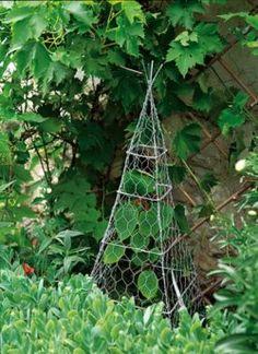 plant, animals, tomato, chicken wire, topiari, birds, garden, sweet peas, deer