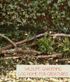 Wildlife Gardening with kids - create a refuge for small animals in your garden or yard with this family fun activity to create a log pile home.