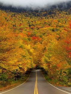 Autumn Tree Tunnel is located on the way up to Smuggler's Notch, a Vermont state park.