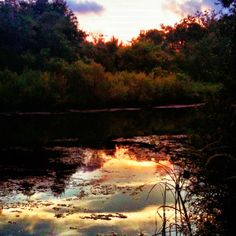 Sunset on Bayou Terre Aux Boeufs