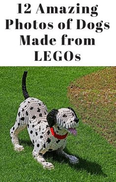WOW, these are amazing!!! http://theilovedogssite.com/12-photos-of-lego-dogs-that-will-make-your-jaw-drop/