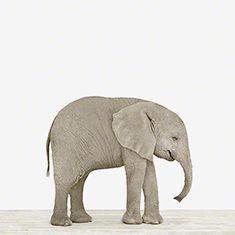 Art for Nursery: The Animal Print Shop | Sharon Montrose
