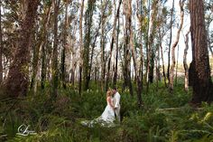 A fabulous shot in our enchanted forest thanks to Litzow Photography.  #kingfisherbay #fraserisland #destinationwedding #fraserislandwedding #fraserwedding http://www.fraserislandweddings.com.au/