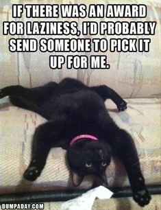 lazy cat This is so funny. Happy Black Cat Tuesday. Incensewoman