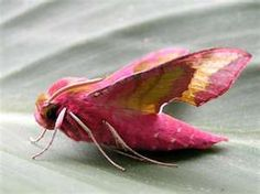 mother nature, yellow moth