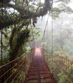 Take your love up high in Costa Rica's jungle canopies, home to 500 species of mammals and birds and 2,500 different plants to discover.