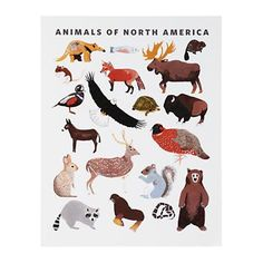 Kids' Posters, Prints & Art: Limited Edition Animals of North America Wall Art in Nod Institute of Art