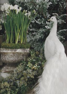 White garden...