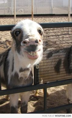 Go ahead... Try not to smile!