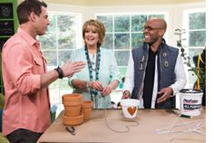 #HomeandFamilyTV Make a perfect #jasmine heart #topiary with @Kenneth Wingard