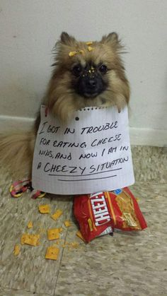 Dog Shame | I hot in trouble for eating cheese nips and now i...