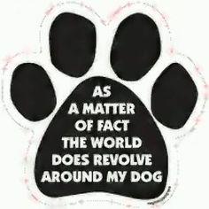 anim, dogs, babi dog, pet, doggi, true, doe, puppi, car magnet