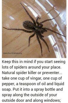 Natural spider killer/preventer