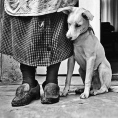 anim, sweet, friends, faith friend, dogs, companionship, art, black white, photographi