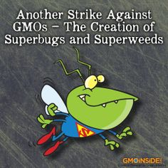 "Scientists have found pest and weed resistance to multiple GMO crops. More recently studies show that the attempt at creating new genetically engineered seeds with ""stacked traits"" has also failed farmers across the U.S. Learn more about the failings of GMOs here: http://gmoinside.org/another-strike-gmos-creation-superbugs-superweeds #GMOs #StopMonsanto #GEfoods #foods"
