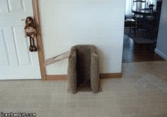 chair, anim, dogs, funni, dinners, dinner time, funny dog gif, puppi, funny gif