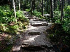 Mt Mitchell Trail