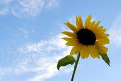 summer.jpg (1280×863)