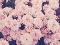 summer flowers, pink roses, pink flowers, soft colors, pale pink, climbing roses, hipster edits, garden, floral