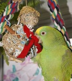 A great bird blog, and this story links to a slide show about making bird toys!