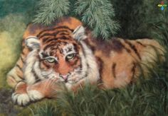 """Картина из шерсти """"Амурский тигр ..."""