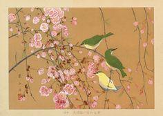 "Birds & Cherry Blossoms | Tattoo Ideas & Inspiration - Japanese Art | Rakuzan (Rakusan) - ""Japanese Bush Warbler"", ca. 1930 | #Japanese #Art #Flowers #Birds"