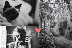 La Mouette:  thelazydream.blog...
