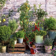 Edible growing in pots, and using upturned crates for a bit of height