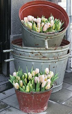 galvanized buckets filled with tulips