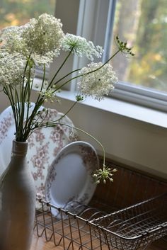Aunt Lorraine always had bouquets of Queen Anne's Lace. Sometimes she used food coloring.