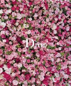logos, pink roses, fashion, christian dior, backgrounds