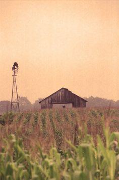 field, beautiful farms and barns, country barn, heaven, countri life
