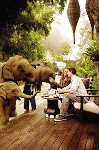elephant camp in thailand