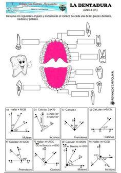Dentadura - angulos