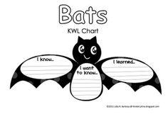Bats: KWL chart