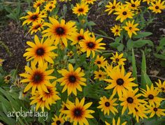 Beautiful Perennials for a Colorful, Butterfly Garden-birdsandbloomsblog.com