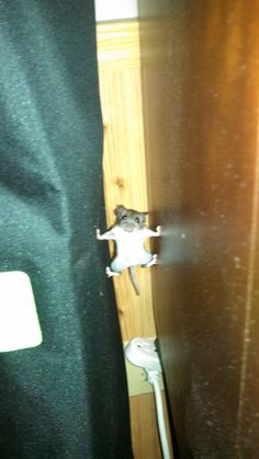 A mouse that went into Mission Impossible mode in my house last year.