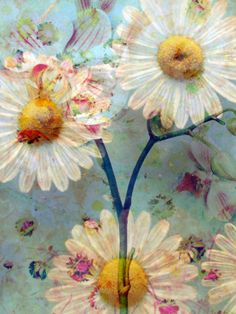 Daisy Summer Days, photographic print at art.com by Alaya Gadeh